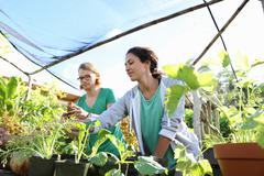 Couple working in greenhouse, seedlings in foreground - stock photo
