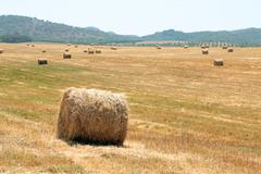 Hay bales in the countryside from Portugal - stock photo