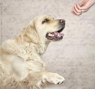 Master wanting to greet with dog - stock photo