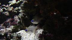 Small fish hiding for predators. Stock Footage