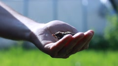 Baby bird sparrow sitting in man`s hand Stock Footage