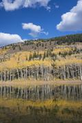 View over the Aspen trees and a wooded hillside at Silver Lake. Stock Photos