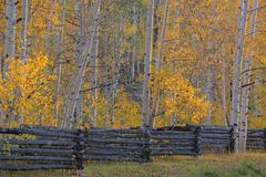 The Kolob Terrace and aspen trees in the Dixie national forest - stock photo