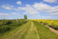 yorkshire wolds bridleway - stock photo