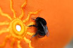 Bumble bee sitting on a bright orange cloth with sun pattern. - stock photo
