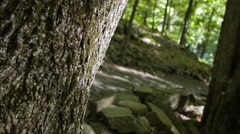 Hiking path Rack Focus at Sleeping Giant Park, spooky woods Stock Footage