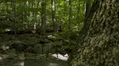 Stock Video Footage of Eerie woods paths in Connecticut, New England forest