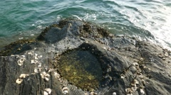 Tide pool, volcanic rocky shore close up, nature created bowl, waves, sea water Stock Footage