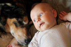 Newborn Baby Laying with Pet German Shepherd Dog - stock photo