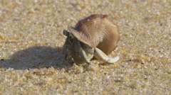 Hermit crab on a warm tropical beach with sound of waves - 4k closeup Stock Footage