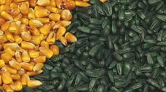 Sunflower and Corn Seed Rotate Stock Footage