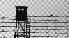 Barbed wire with sparrow and watchtower - alpha - stock footage
