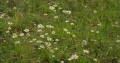 Field of Flowers Stock Footage
