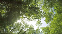 Sun through the trees Stock Footage