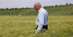 Farmland Producer Studying Wheat Harvest Check Ears Growing Cereal Production Stock Footage