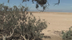 Foliage at a Red Sea Oasis Stock Footage
