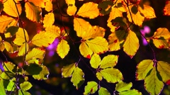 textured golden leaves colorized art effect - stock footage