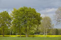 Some trees in the sunlight with a dark sky - stock photo