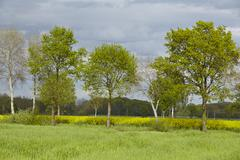 Stock Photo of Some trees in the sunlight with a dark sky