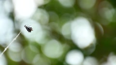 Orbweaver spider on web Stock Footage
