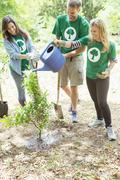 Environmentalist volunteers watering newly planted tree Stock Photos