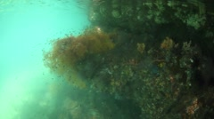 Corals and Colorful Invertebrates Stock Footage