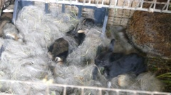 New born baby rabits in cage Stock Footage