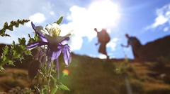 Hikers pass Columbine flower Colorado mountains Stock Footage