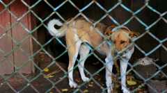 Stock Video Footage of dog caged. sad dog in shelter