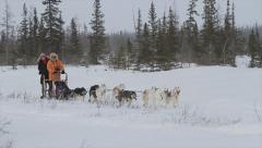 Dog sledding in frozen northern Canda Stock Footage