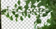 Small Tree Bush Plants Leaves Grass Green Stock Footage