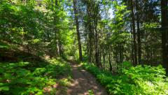 Time lapse trekking through summer deep highland forest at Carpathian mountains Stock Footage