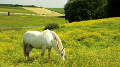 Horses on the meadow. Stock Footage