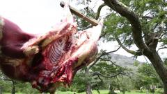Cow beef hanging from trees Stock Footage