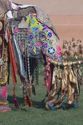 Decorated Indian Elephant - stock photo