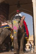 Elephant at Amber Fort Stock Photos