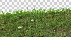Plants Leaves Flowers Grass Green Stock Footage