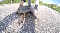 Slow motion angry snapping turtle Stock Footage
