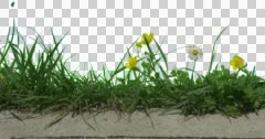 White Yellow Daisy Buttercup Plants Flowers Grass Stock Footage