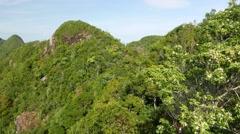 Blossom bush and rainforest mountain peak in sunlight Stock Footage