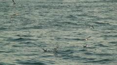 Flock of Seagulls on the Bosphorus Stock Footage