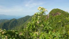 Mountain landscape panorama, blossom bush, skybridge observation platform Stock Footage