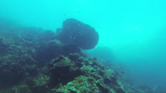 Coral Reef and Tropical Fish in Philippines Stock Footage