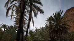 4k tighmert oasis palm palmerie nature morocco landscape Stock Footage