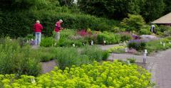 Senior couple botanic garden blooming flowers Stock Footage