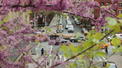 The Crossroad Transportation Of New York And Blooming Trees Stock Footage