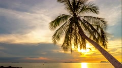 Palm trees silhouette at sunset. 4K. Time Lapse Stock Footage