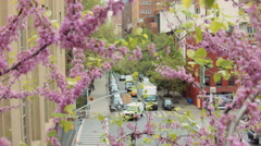 The Crossroad Of New York Thru The Blooming Tree Stock Footage