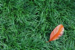 Fallen orange leaf on the green grass - stock photo