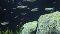 fish, Aquarium Background - stock footage